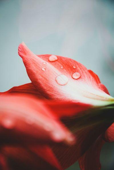 #flower  #flowerphotography #MacroShot #macro #macrophotography #waterdrops #raindrops #photography #photo #nikon #nikonphotography