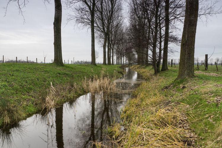 Oude Biezenkreek, Aardenburg EyeEm Market © Creek Plant Water Grass Tranquil Scene Landscape Scenics - Nature Sony A77ii Zeeuws Vlaanderen Zeeland  The Netherlands
