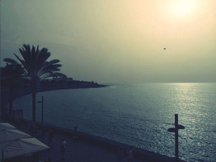 Beach Enjoying The Sun Palm Trees Fog Bright Ocean Ocean View Afternoon Open Edit