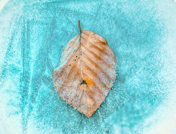 Frozen leaf in water Frozen Ice Beauty In Nature Blue Freshness Leaf Nature No People Outdoors