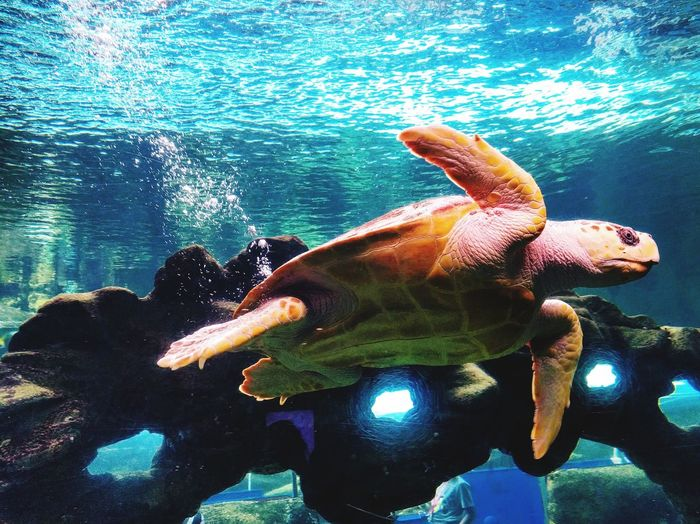 Turtle Underwater Water Animal Themes Sea Life Nature Sea UnderSea Sea Turtle AquariumLove Nature🌲 No People Blue Bubbles Beauty In Nature Beauty Love Swimming One Animal Swimming