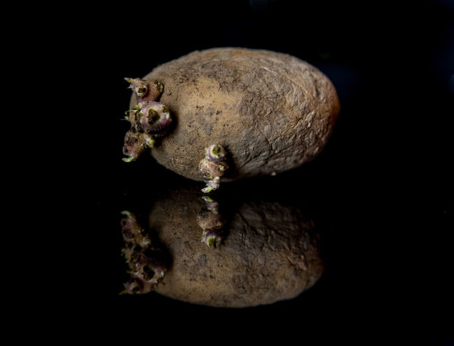 Potato Black Background Close-up Copy Space Cut Out Indoors  Nature No People Potatoes Sea Sea Life Single Object Studio Shot