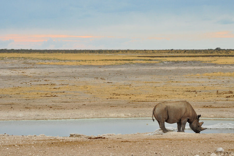 Africa Animal Themes Animals In The Wild Beauty In Nature Day Elephant Full Length Landscape Mammal Namibia Nature No People One Animal Outdoors Rhino Sky Sunset