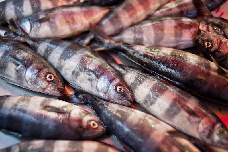 Mediterranean fish-ph©Pino Miraglia Mediterranean Sea Pino Miraglia Photographer Fish Fish Market Mediterranean Fish Seafood Series Fish