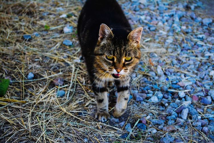 Streunerkatze EyeEm Selects Domestic Cat Pets Feline One Animal Animal Mammal Domestic Animals No People Nature first eyeem photo