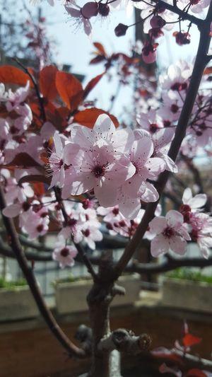 Adopta el ritmo de la naturaleza; su secreto es la paciencia.-Ralph Waldo Emerson. Flower Tree Flower Head Branch Springtime Petal Sky Close-up Blooming Plant Blossom Botany Pistil
