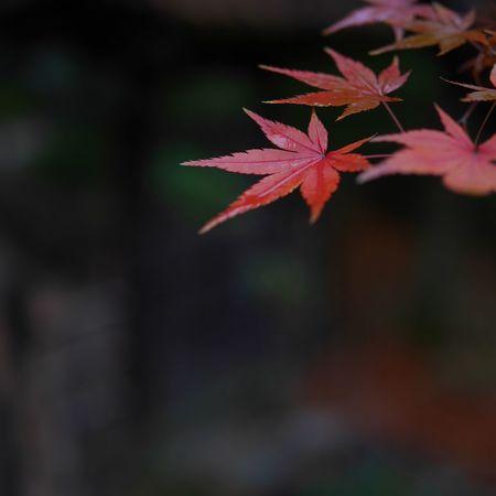 秋もそろそろ終わり。 Autumn Leaves Lumix Gx7