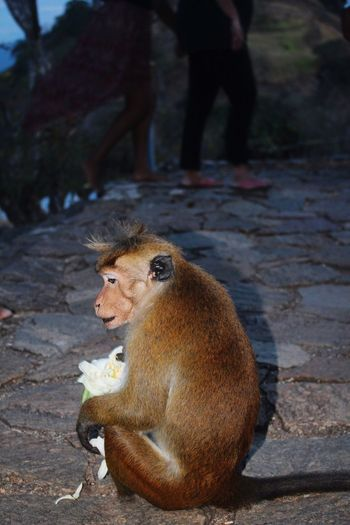 Animal Themes Animals In The Wild Focus On Foreground One Animal Eating Sitting Food And Drink