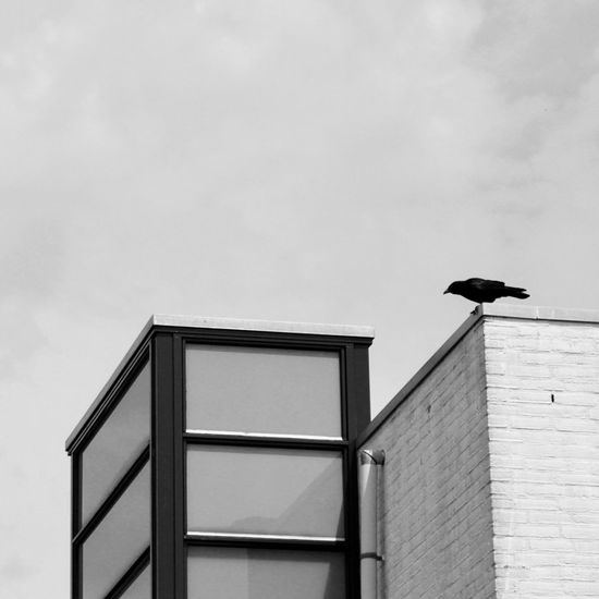 The Week On EyeEm Bird Built Structure Architecture Building Exterior Outdoors Low Angle View Crow Day One Animal Animal Wildlife No People Sky Blackandwhite Architecture EyeEmNewHere