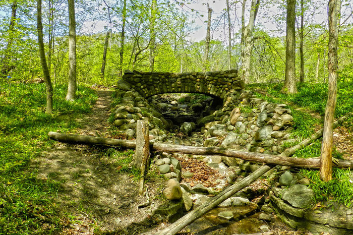 Stone Bridge Beauty In Nature Day Fallen Tree Forest Grass Green Color Growth Henry Ford Estate Landscape Log Lush Foliage Michigan Nature No People Non-urban Scene Old Outdoors Plant Scenics Tranquil Scene Tranquility Tree Tree Trunk Wood - Material WoodLand