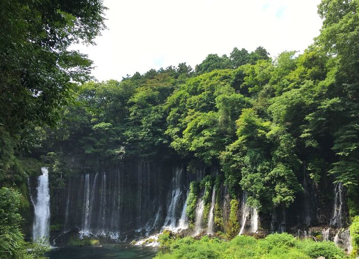 Chasing waterfalls Tree Waterfall Beauty In Nature Green Color Nature Water Scenics Forest Growth Outdoors No People Lush Foliage Day Sky Shiraito Falls