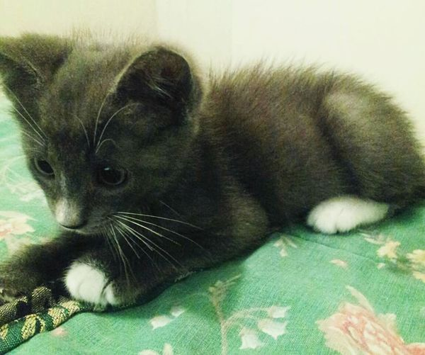 Kitten Blue Kitten Kitty Gray Cats Gray Kitten Gray Kitten.