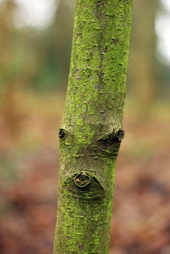 tree people 3 of 3 Bark Beauty In Nature Close-up Day Face, Expressive, Focus On Foreground Green Green Color Growth Moss Natural Pattern Nature No People Outdoors Selective Focus Tranquility Tree Tree Trunk