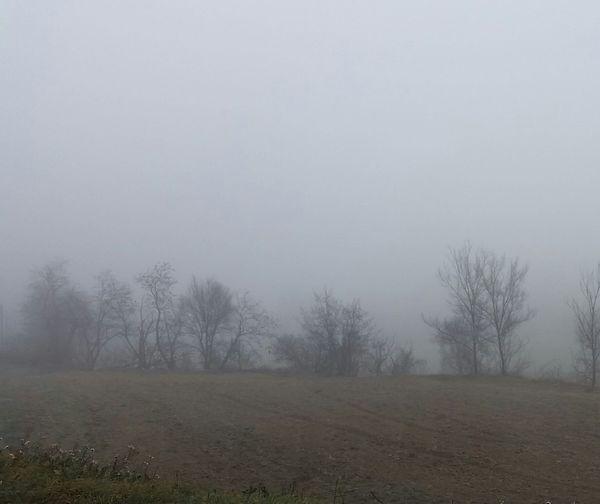 Morning fog Nature Fog Winter