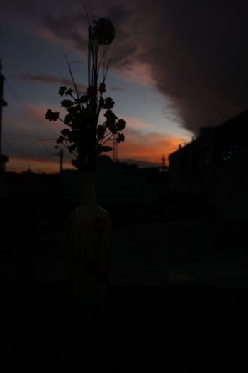 EyeEmNewHere Sunset Silhouette Dusk Cloud - Sky Sky No People Beauty In Nature Scenics Tree Outdoors Dramatic Sky Nature