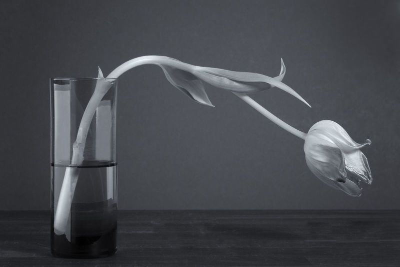 A drooping tulip flower Black & White Blackandwhite Close-up Fragility Indoors  No People Plain Background Studio Shot Table Tulip Tulip Flower Tulip In A Vase