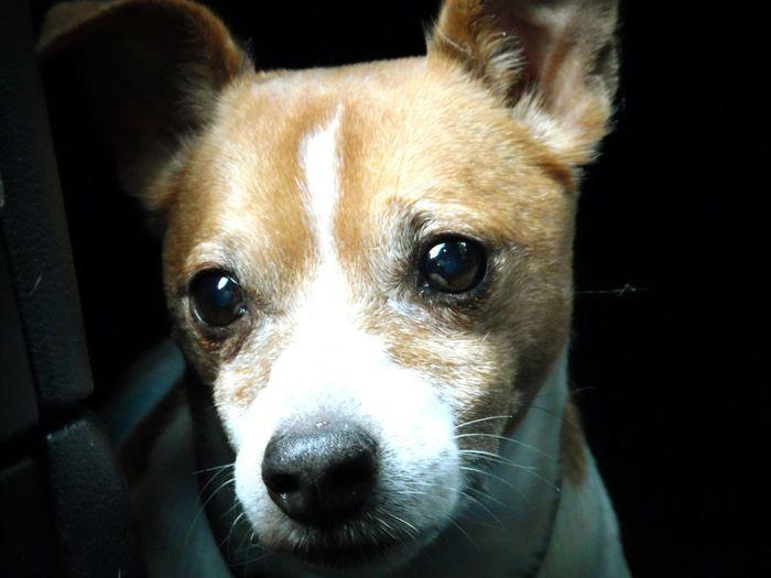 Hello World Nahaufnahme Dog Hund Jack Russell Wahts Up ?!