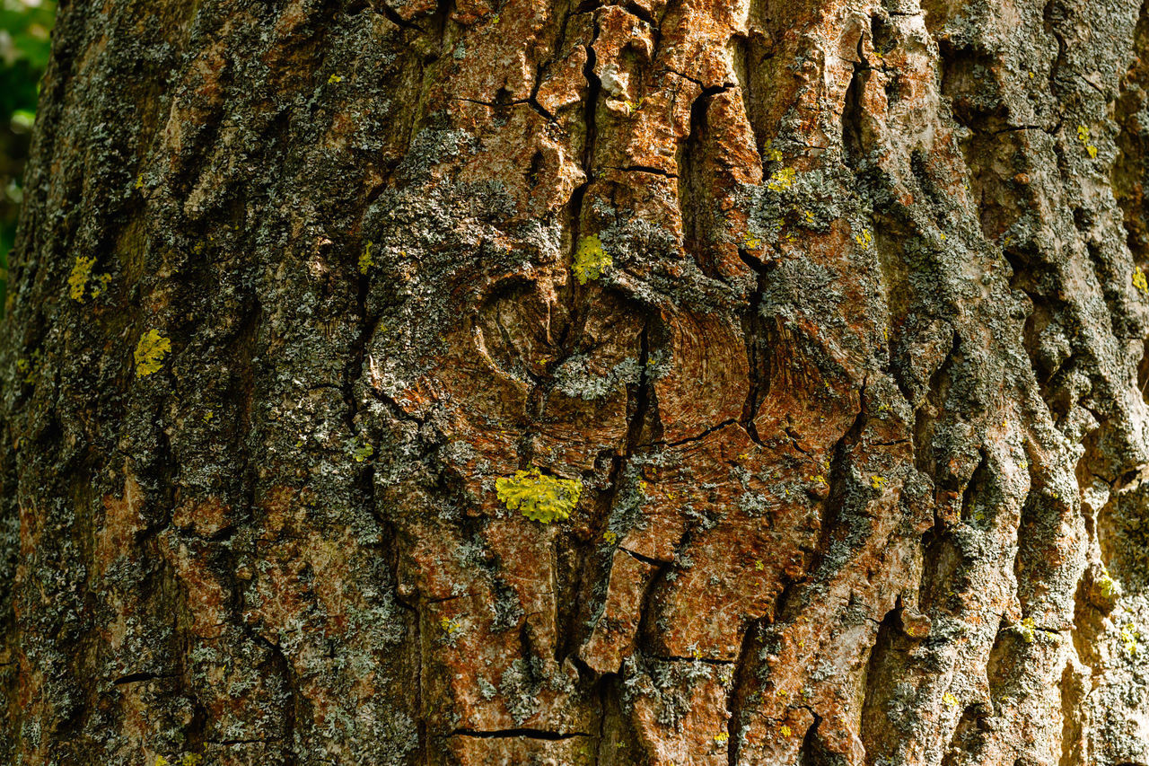 tree trunk, trunk, textured, tree, rough, close-up, full frame, plant, bark, natural pattern, no people, backgrounds, nature, pattern, brown, wood - material, plant bark, day, growth, outdoors, textured effect, lichen, tree ring, natural condition