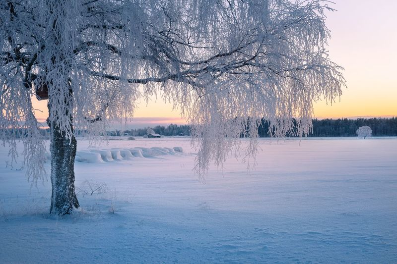 cenic winter landscape with morning light and frosty tree in Finland Cold Temperature Snow Winter Tree Beauty In Nature Frozen Tranquility Tranquil Scene Scenics - Nature Nature Environment Landscape Sunset No People Outdoors Extreme Weather Ice Cold Sky White Color Finland Snow Covered Trees Sunrise Frosty Tranquility