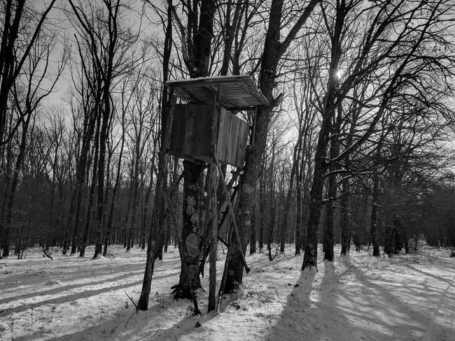 Tree Cold Temperature Snow Winter Nature Forest Beauty In Nature Outdoors No People Day Tree Trunk Hunters Tree House Blackandwhite Black & White EyeEmNewHere