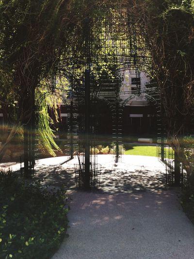 Garden Hospital Hope Rainbow Reflection