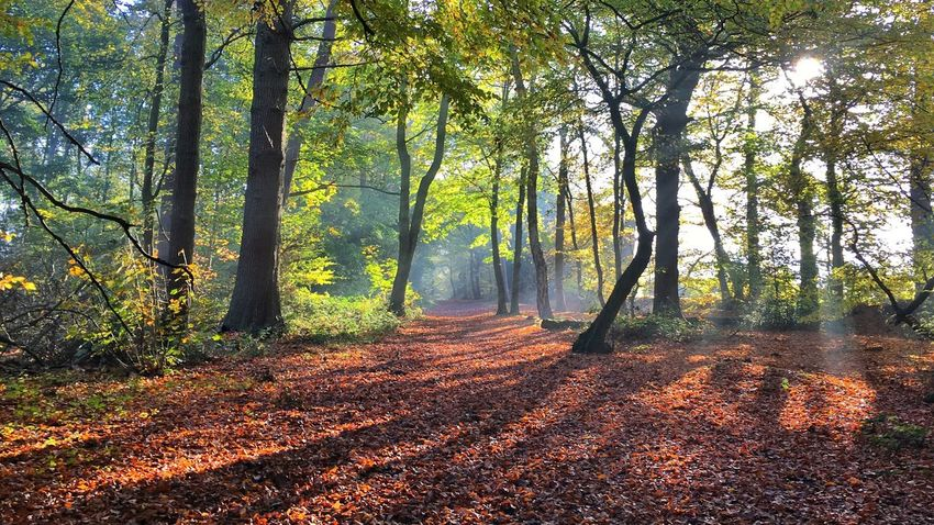 Misty morning in the woods Beauty In Nature Misty Morning EyeEmNewHere Autumn Tree Nature Forest Sunbeam Scenics Beauty In Nature Sunlight Tranquil Scene Footpath Outdoors