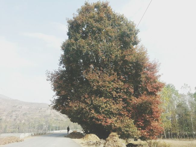 Chinar Tree Color Changes Yellow To Orange Man Standing Mountain View Nature_collection Beauty In Nature