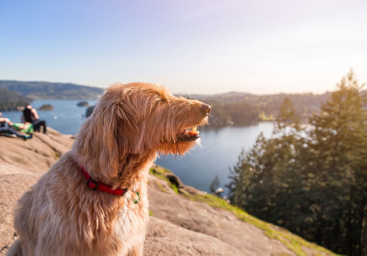 Dog looking away while sitting against landscape