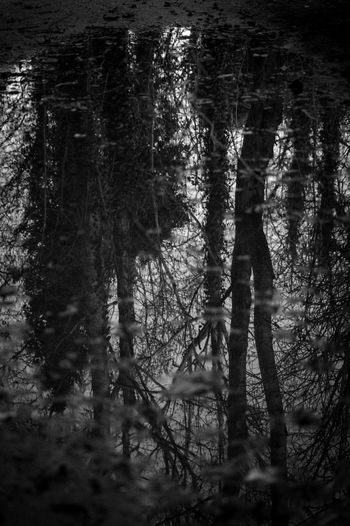 Reflection. Blackandwhite Photography Pentax K-3 Belfast County Antrim Northern Ireland Forestwalk Forest Path Puddle Reflections Beauty In Nature