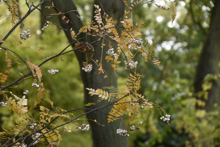 Autumn Autumn Colors Beauty In Nature Beth Chato Gardens Branch Close-up Day Elmstead Market Essex Fall Freshness Growth Leaf Nature No People Outdoors Tree