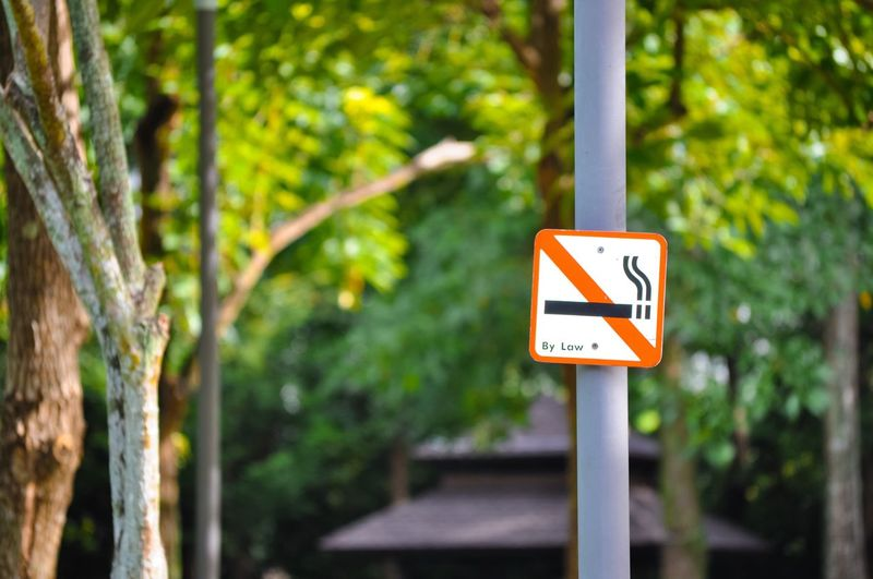 Focus On Foreground Communication Road Sign No People Day Close-up Outdoors Tree Clean Air Pollution Warning Sign Warning No Smoking Sign No Smoking Signage