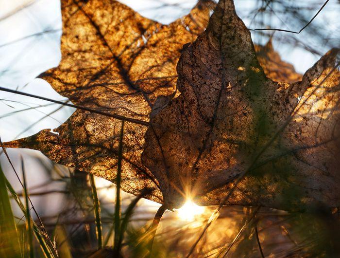2019 Niklas Storm April Sunset Leaf Tree Change Sunlight Sky Close-up Leaf Vein Shining Maple Leaves Fallen Dried Fall Sun Branch My Best Photo