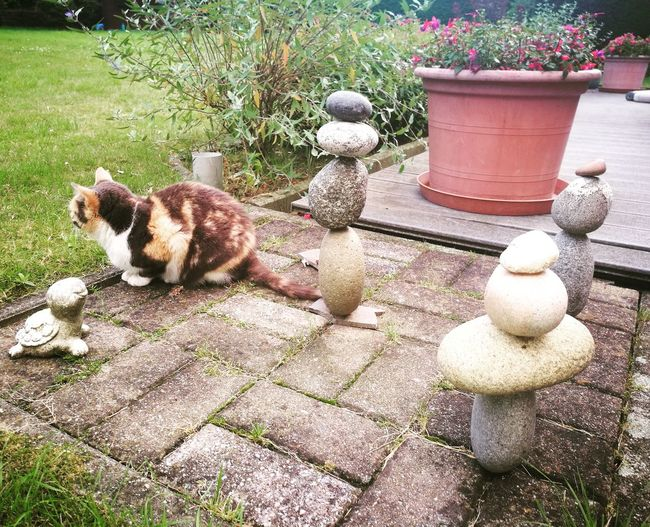 Toby the cat protecting the stone towers First Eyeem Photo