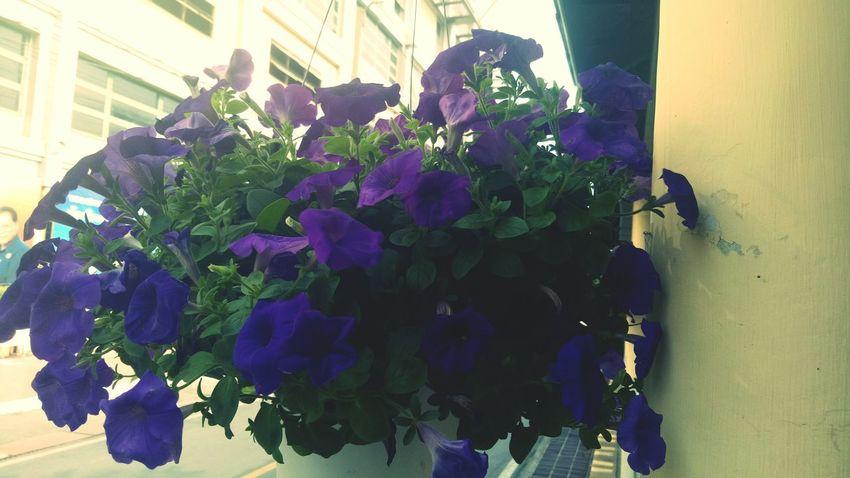 Flower City Plant Close-up