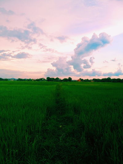 Make me calm Green Cloud - Sky Sunset Skyview Paddy Field Tree Rice Paddy Sunset Rural Scene Agriculture Field Irrigation Equipment Crop  Purple Sky Parallel High Dynamic Range Imaging Plantation Dramatic Sky Cereal Plant Agricultural Field Romantic Sky Terraced Field Rice - Cereal Plant EyeEmNewHere It's About The Journey 2018 In One Photograph