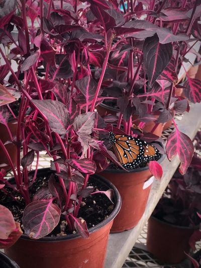 Naturaleza🍃💚 Mariposa En La Naturaleza Plant Flower