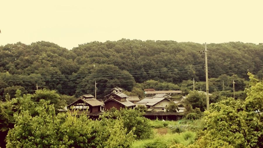 Japan Kaiko Silk 養蚕 蚕