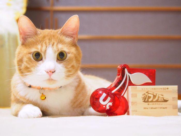 yoneyuki Cats Of EyeEm Cat Lovers Cat Watching Cat Photography Catoftheday Catsofinstagram Yoneyukithecat