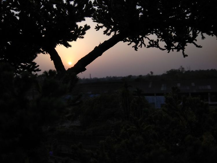 Bonzai Tree Terrace No Filters  Tree Silhouette Sunset Outdoors Nature Beauty In Nature