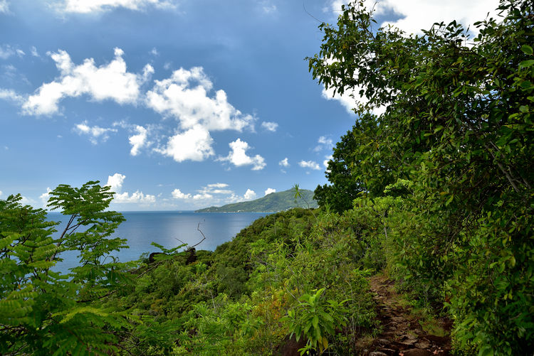 Anse Major Trail Plant Tree Beauty In Nature Water Sky Tranquility Scenics - Nature Growth Green Color Tranquil Scene Cloud - Sky Nature Non-urban Scene Day No People Idyllic Land Forest Sea Walking Path Tropic Nature Seychelles Islands Tropic Plants Travel Photography Enjoying Life