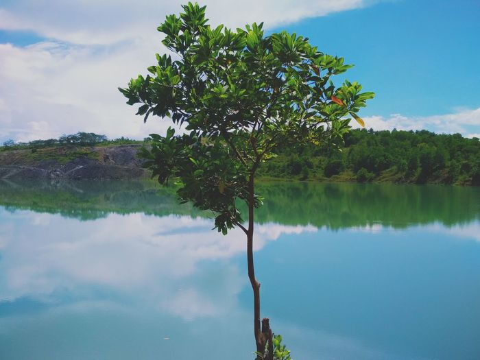 between green and blue sky EyeEmNewHere Shades Of Winter Tree Water Lake Reflection Sky Outdoors Nature Landscape Beauty In Nature Mountain Blue No People Day Palm Tree Flood Social Issues