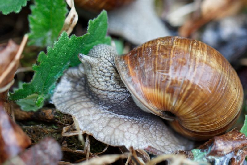 Schnecke Nature Close-up Animal Wildlife Outdoors No People Day Animals In The Wild One Animal Animal Themes Leaf Beauty In Nature Plant Fragility Schnecke In Bayern
