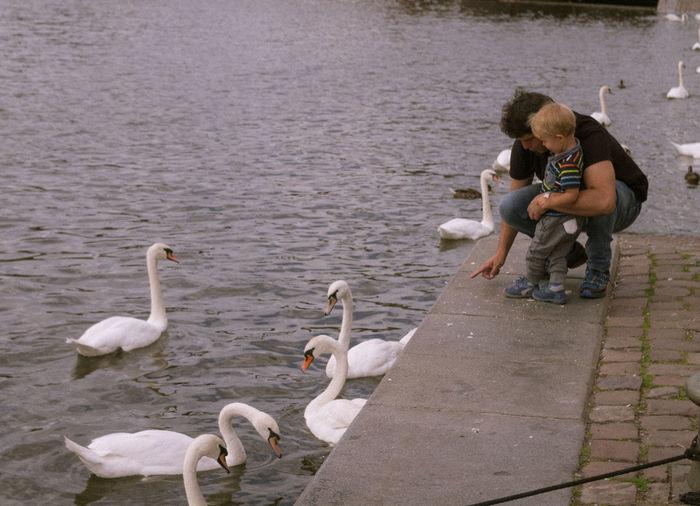 Animal Themes Czech Republic Feeding  Outdoors Prague Riverside Street Streetphotography Swans Water