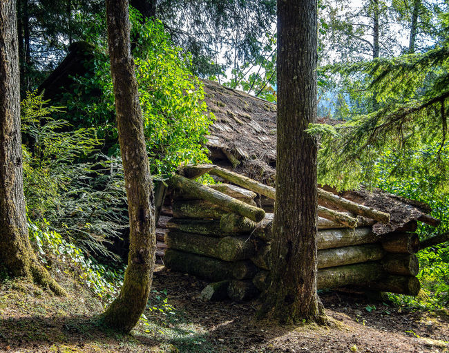 Nimkish Valley near Woss, British Columbia Tree Plant Forest Tree Trunk Trunk Land Nature Growth Wood - Material Staircase No People Day Tranquility Architecture Beauty In Nature Outdoors Green Color Tranquil Scene Steps And Staircases Built Structure WoodLand Wood Log Cabin