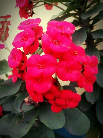 Flower Beauty In Nature Nature Red Close-up Outdoors Petal No People Day Plant Growth Freshness Flower Head