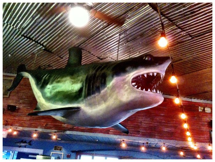 Interior Cafe Display Ferocity Shark Display Illuminated Animal No People Animal Representation Nature Animal Themes Fish Indoors  Mouth Open