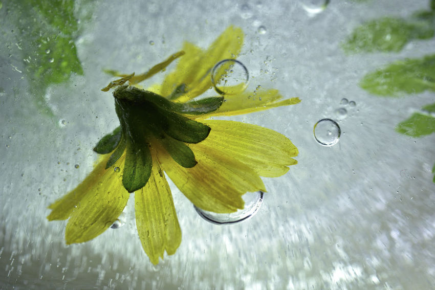 Frozen water, bubbles and plants freeze up. Frozen Ice Water Drops Background Beauty In Nature Bubble Close-up Day Drop Flower Flower Head Fragility Freeze Freshness Green Color High Angle View Leaf Nature No People Outdoors Plant RainDrop Water Wet Zero Degrees