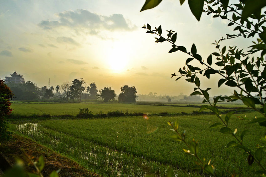 Beautiful Nature EyeEmNewHere Beauty In Nature Environment Land Landscape Nature No People Outdoors Plantation Rural Scene Scenics - Nature Sky Sun Tree
