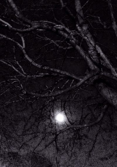 Creeping in almost full The Dark Side Of The Moon Hugging A Tree TreePorn Darkness And Light Nightphotography Blackandwhite Blackandwhite Photography EyeEm Nature Lover Eye4photography