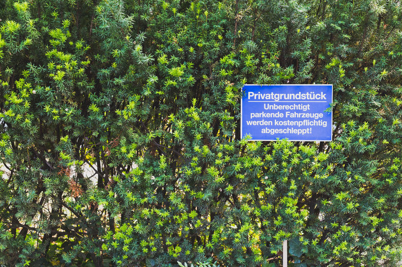 Information sign by trees in forest